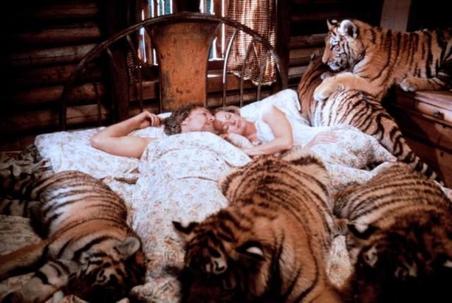 Tippi tiger-snoozling